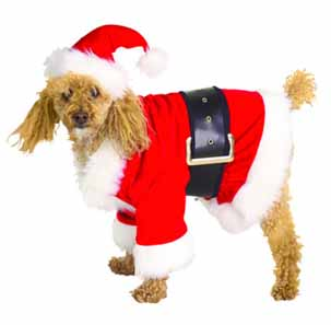 Fancy Dress Costumes For Dogs At Christmas